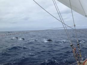 Very happy dolphins