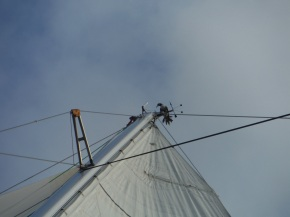 And this one spent the night with us! At least he stayed up there and we knew not to walk anywhere under the mast area.