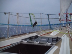 I m beginning to think the birds have a thing for our boat. Hope it doesn't decide to check out our sail locker